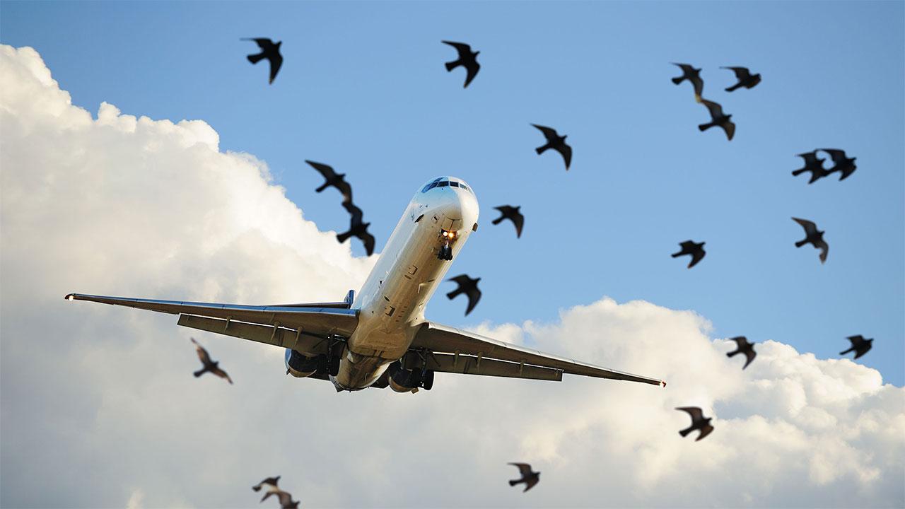نجات جان پرندگان با نانو پوشش ها
