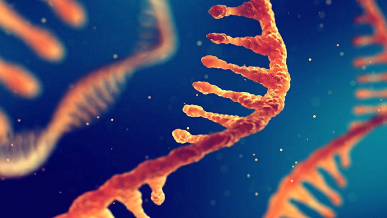 نانوذرات RNA برای مقابله با سرطان