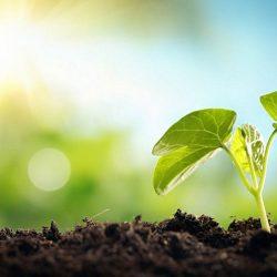 تقویت خاک گیاهان با استفاده از نانوالیاف