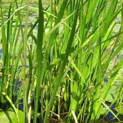 محافظت از گیاهان با کمک نانوذراتی که از گیاهان بهدست آمده!