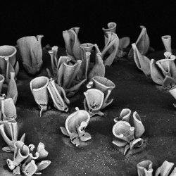 چگونه با خودآرایی، نانوکامپوزیتهای کاربردی بسازیم؟